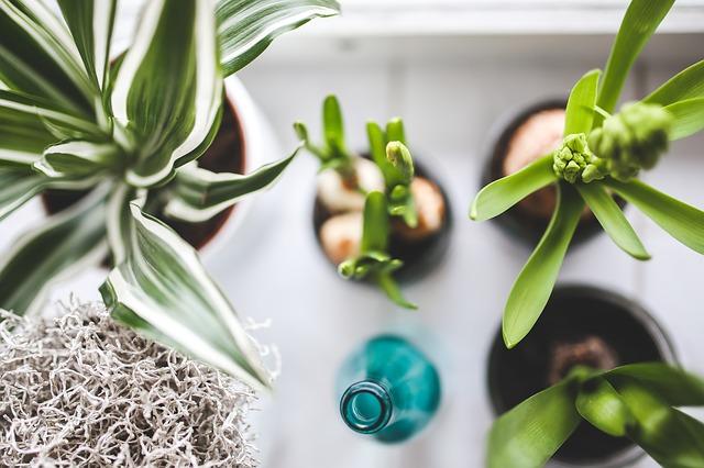 pokojové rostliny a láhev